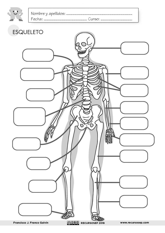 El Esqueleto Láminas Para El Aula Y Fichas Para El Alumno Es En Esqueleto Humano Para Niños Cuerpo Humano Para Niños Huesos Del Cuerpo Humano