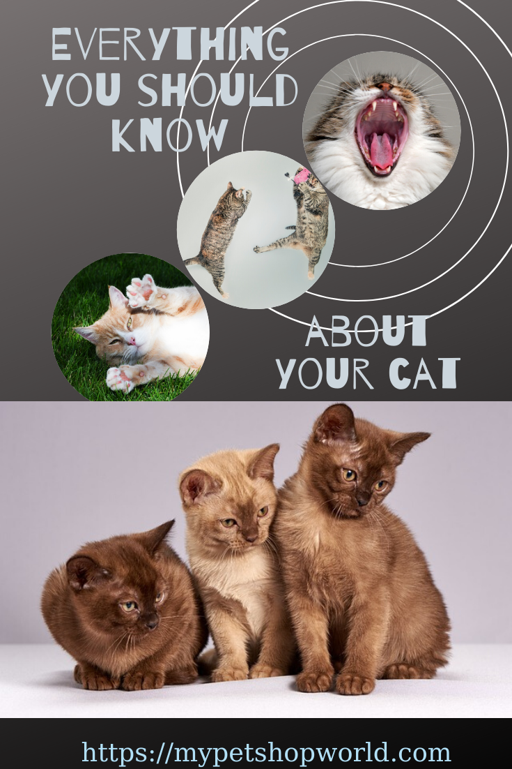 Do You Speak Cat Become Fluent In The Cat Language Understand Your Kitty In No Time Dog Nipping Cat Biting Cats