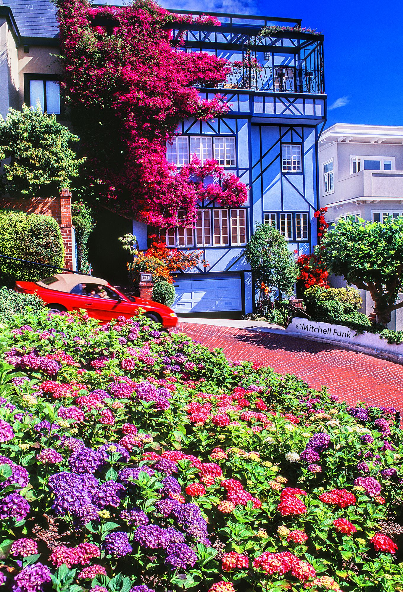 Blooming flowers on lombard street san francisco by