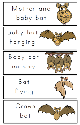 Bat Life Cycle Printable From Preschool Printables On Teachersnotebook Com 25 Pages Preschool Printables Life Cycles Bat