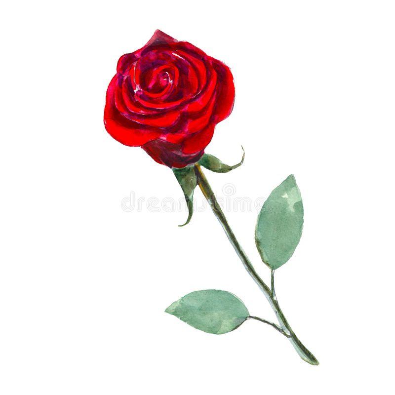Desenho De Rosas Para Colorir 20 Imagens Para Imprimir Rosas