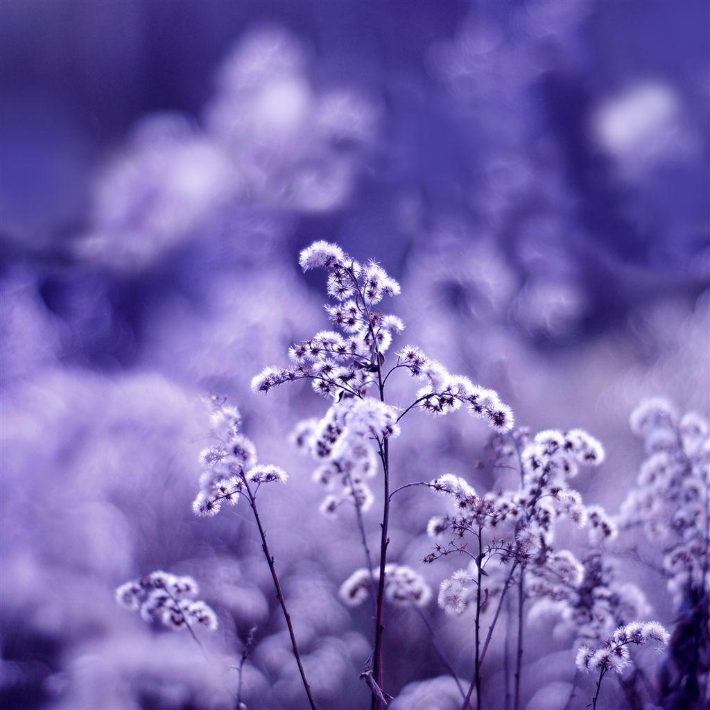 Motion Blur iPad Air Wallpapers Purple plants, Flower