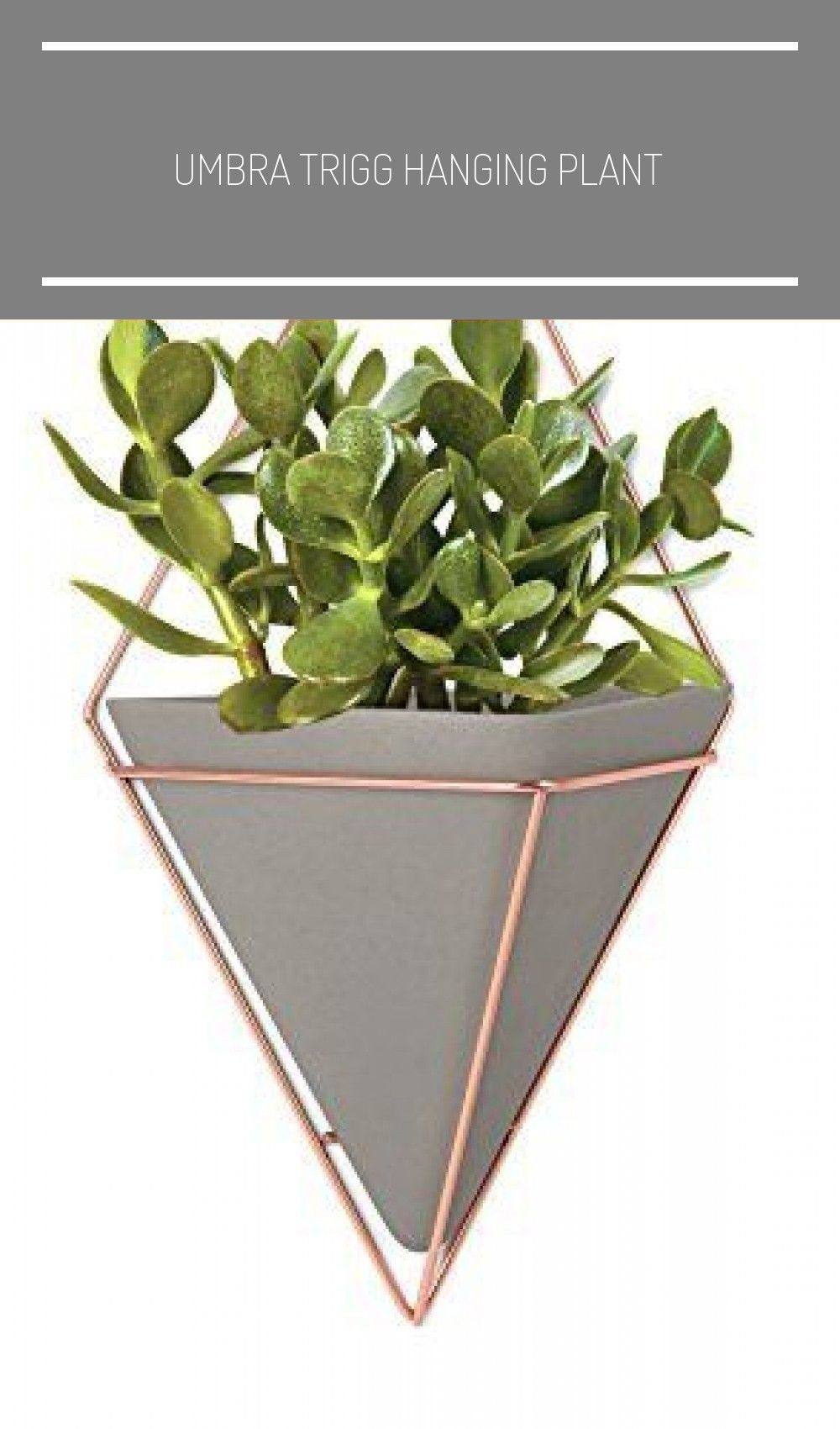 Umbra Trigg Hanging Planter Vase Geometric Wall Decor Container Great For Succulent Plants Air Plant Mini Cactus In 2020 Hanging Plants Hanging Planters Plants