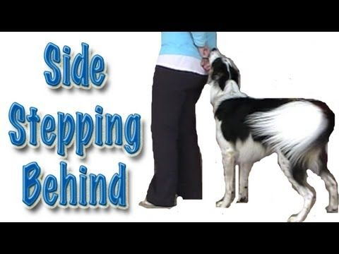 Behind Side Stepping Canine Freestyle Clicker Training Youtube