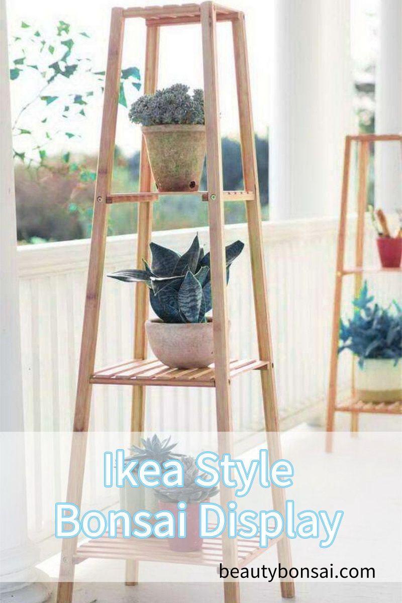 Bonsai Tree Present Tables Display Bonsai Display Stand