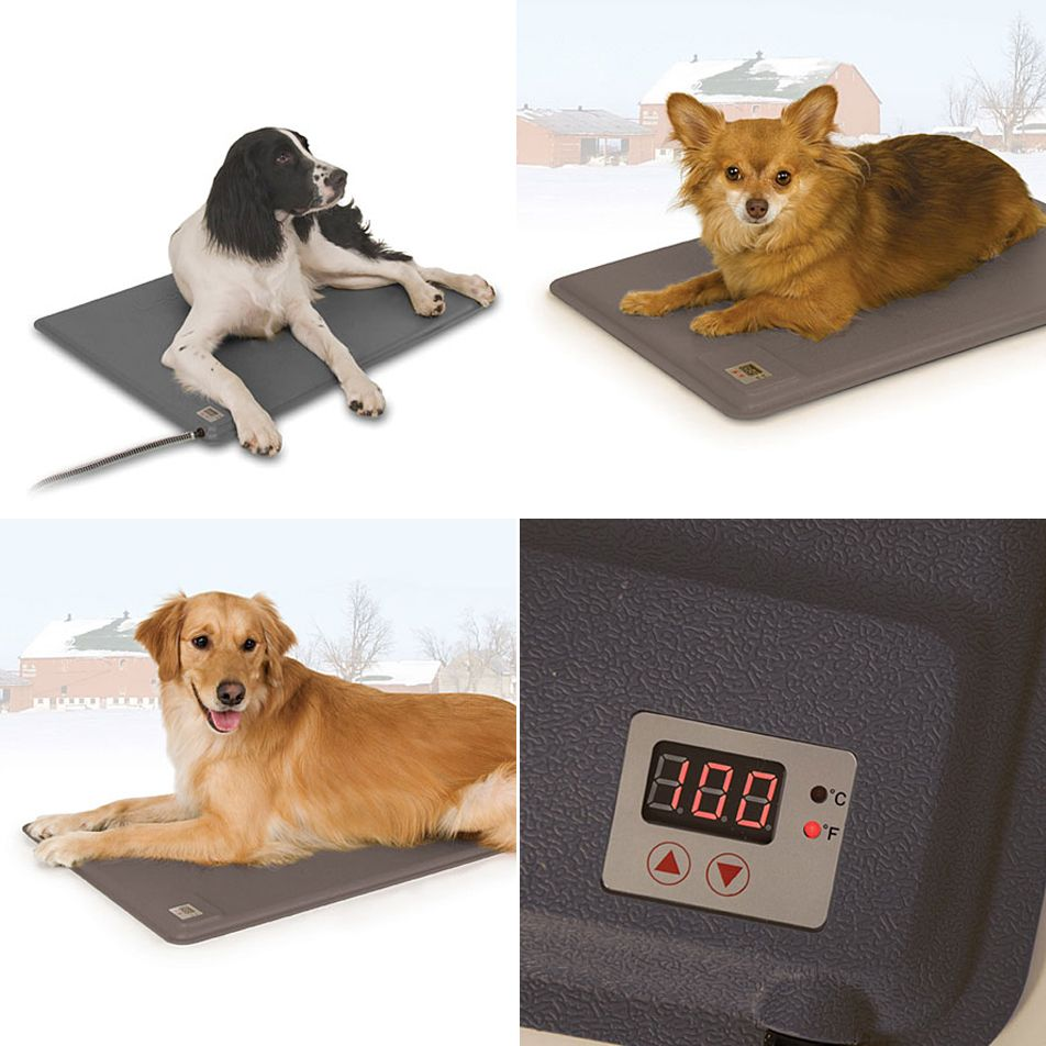Heat Is Beneficial And Soothing For Active And Aging Dogs Our