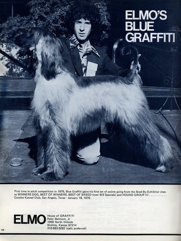 Blue Graffiti 1976 Afghan hound, Hound dog, Sighthound