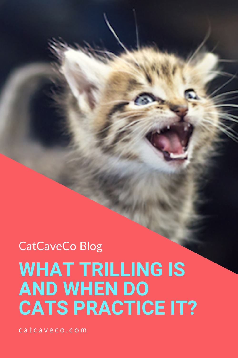 Cats Trilling And It S Practices In 2020 Cat Behavior Soothing Baby Cat Voice