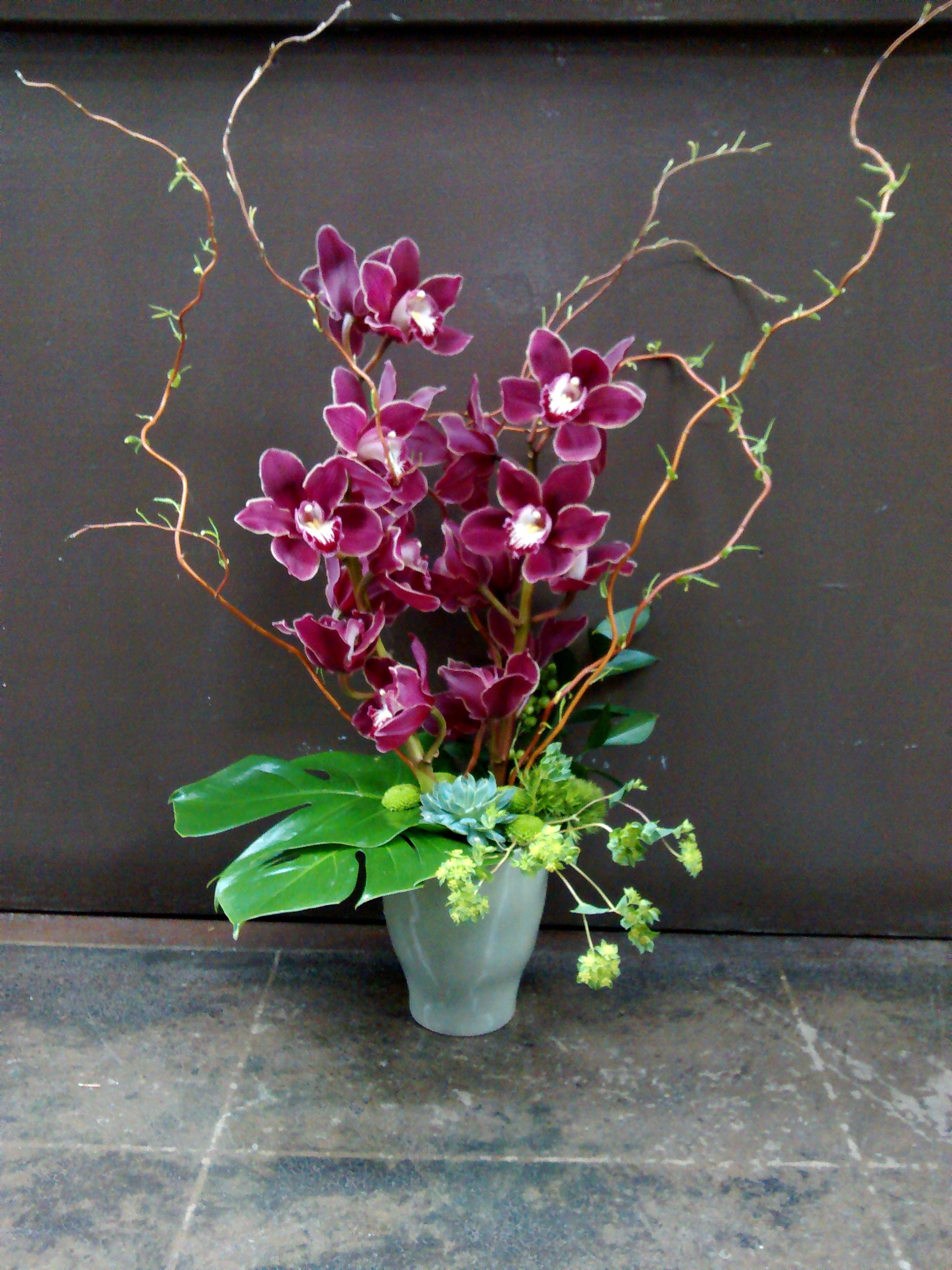 Growing beauty variety orchid arrangements pinterest
