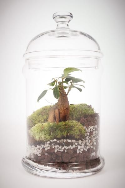 mini d me terrarium humide green factory wishlist pinterest terrarium et minis. Black Bedroom Furniture Sets. Home Design Ideas