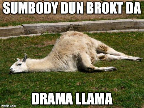 21 Funny Llama Memes If You Don T Need No Drama Funny Llama Llama Drama Puppies Funny