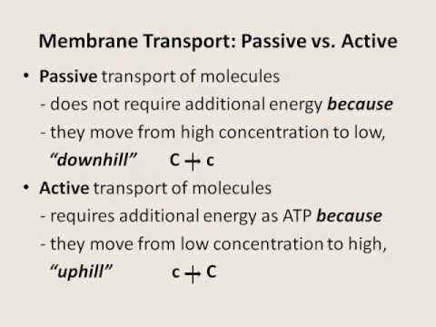 Membrane Transport - Diffusion, Osmosis, Filtration, Phagocytosis ...