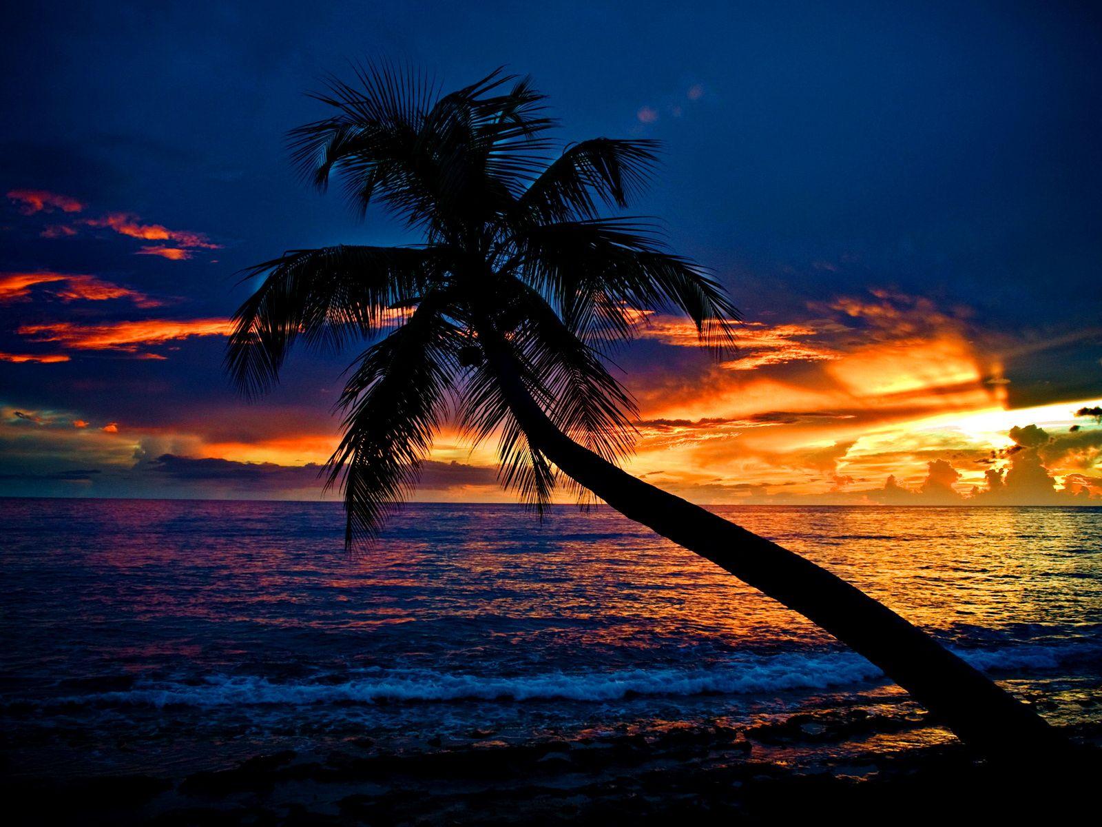 The palm Beach wallpaper, Sunset wallpaper