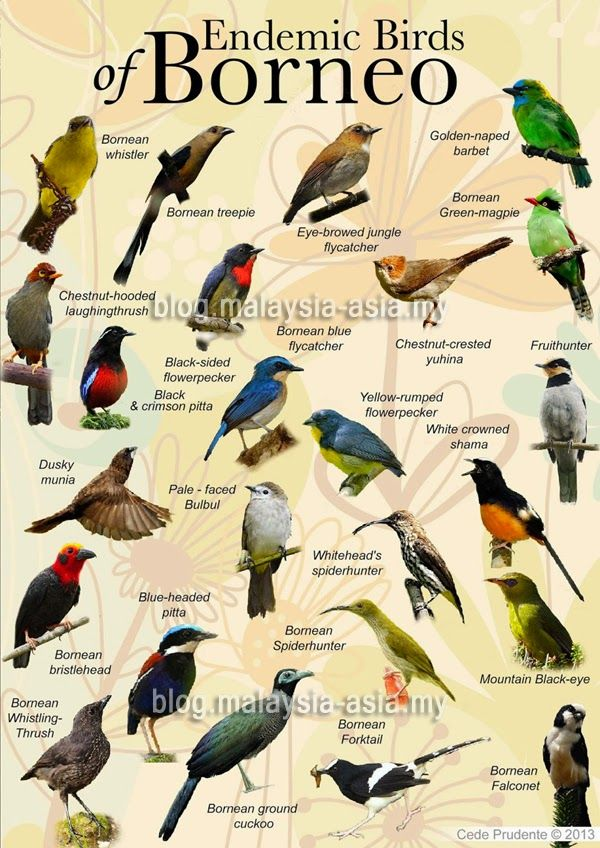 Image result for birds , brunei | Borneo plants and ...