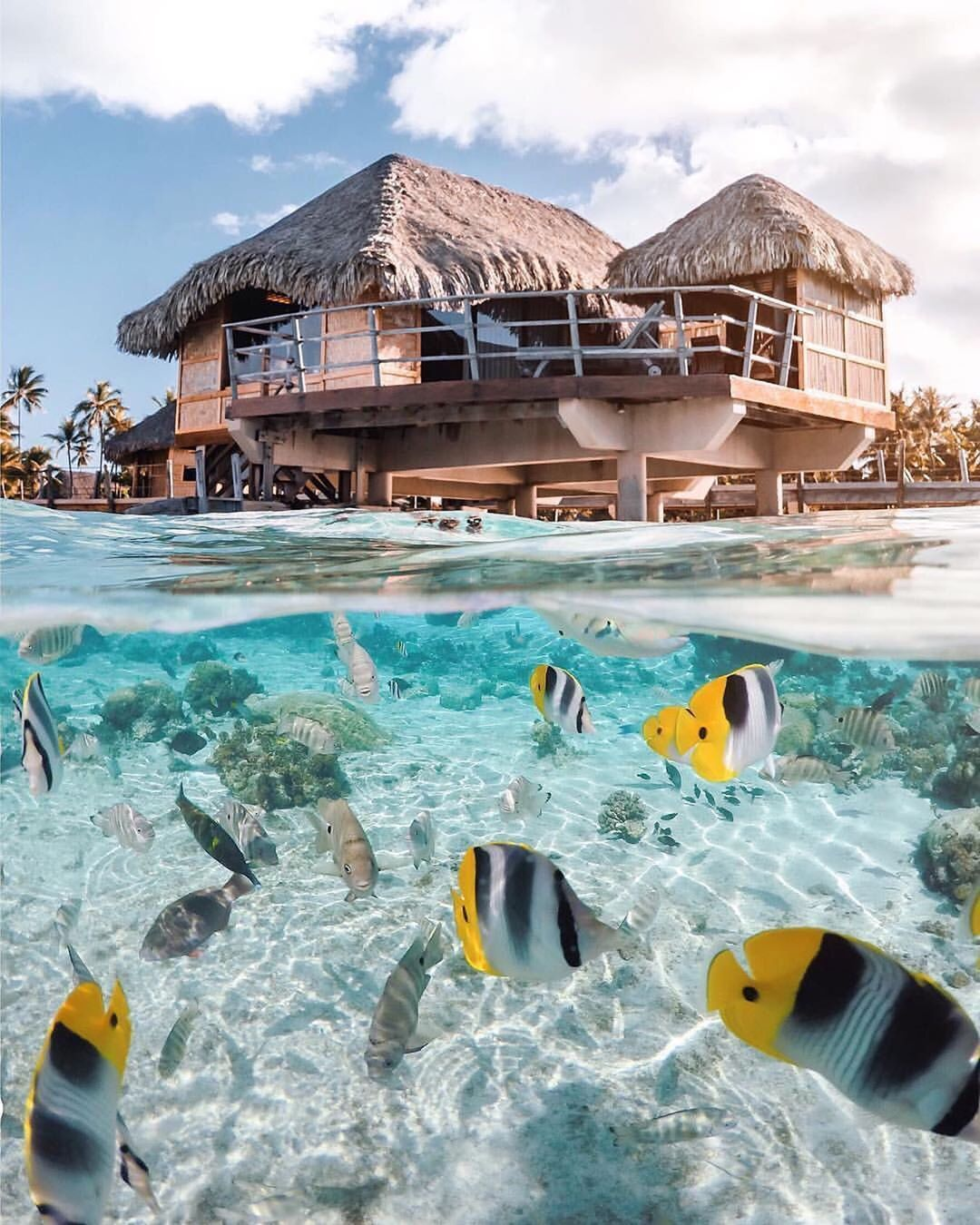 Tahiti is the largest island in French Polynesia the