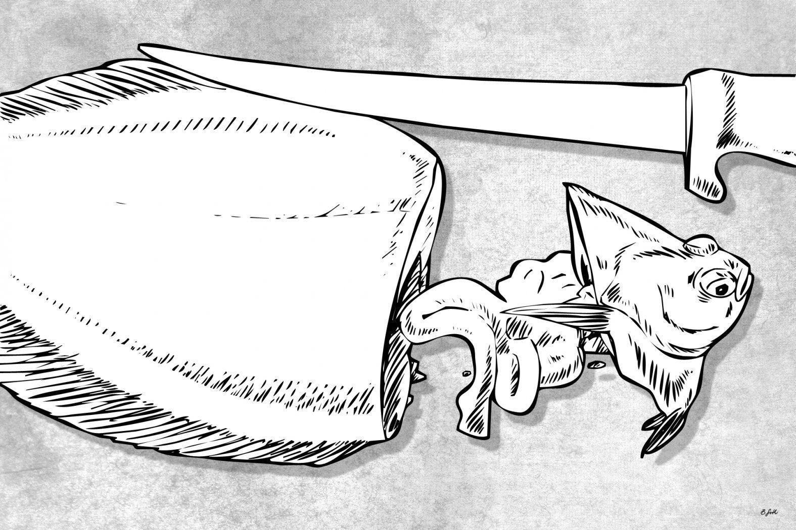 scholle filetieren