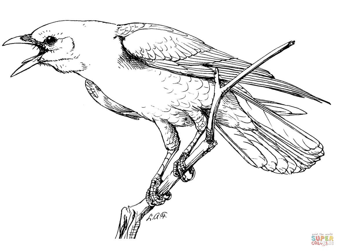American Crow Coloring Page With Images American Crow
