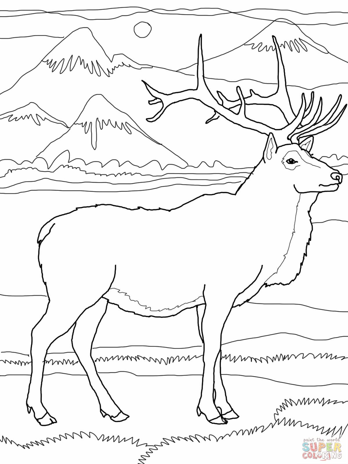 Elk Coloring Pages Elk Or Wapiti Coloring Online Super