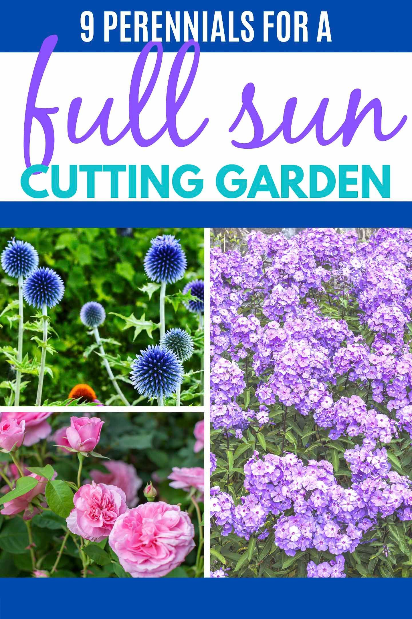 Perennial Ground Cover Full Sun: I Love This List Of Full Sun Perennials! They Are Fragrant