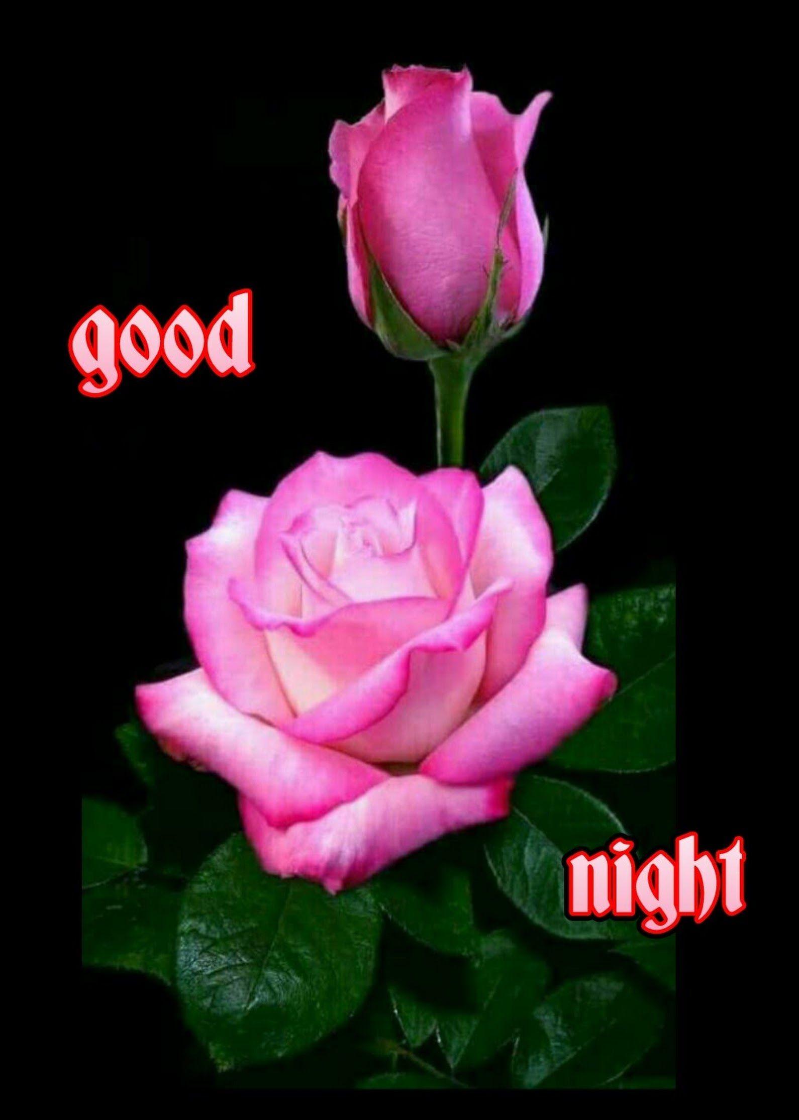 Good Night Kishor Ekatpure Google Beautiful Flowers And Roses