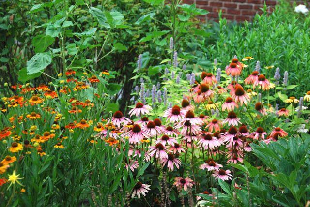 A Long Lasting Border Plants Plant Combinations Echinacea