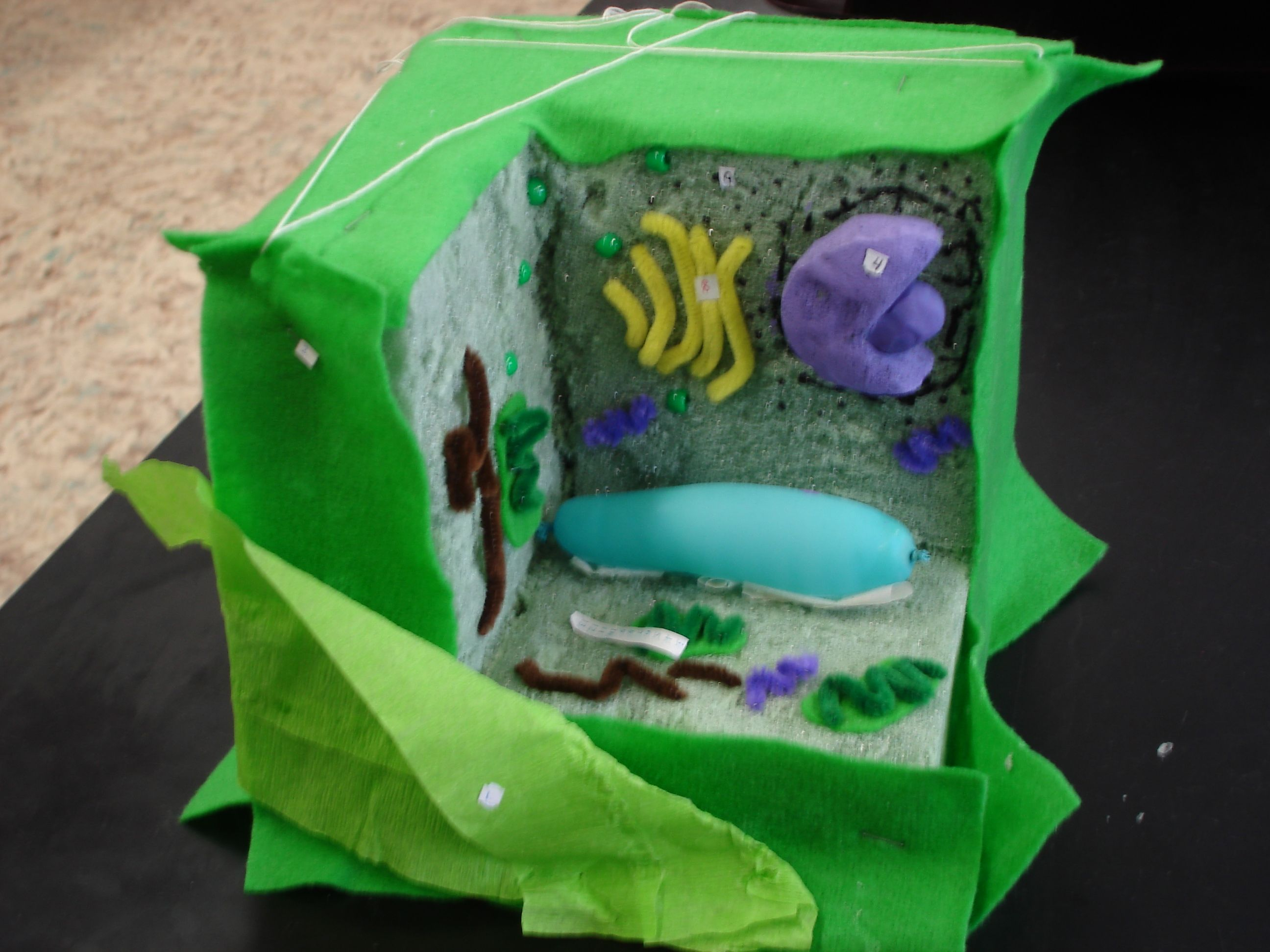 3d animal cell model, 3d plant cell model in a shoebox, 3d