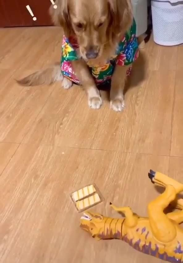 A Super Cute And Funny Dog