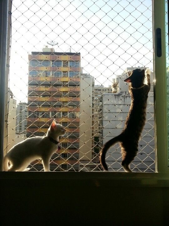 #cute #kitty #cats #window