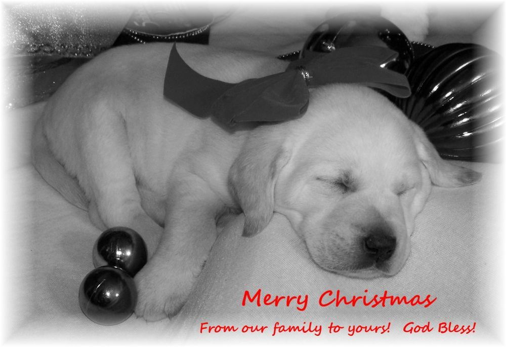 Our Lovable Labs Welcome To Our Lovable Labs Of Minnesota And Georgia Adorable Lab Puppies From Our Home To Yours Lab Puppies Lovable Puppies