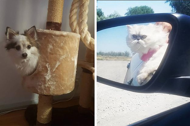 9 Dogs And 8 Cats Possibly Having An Identity Crisis