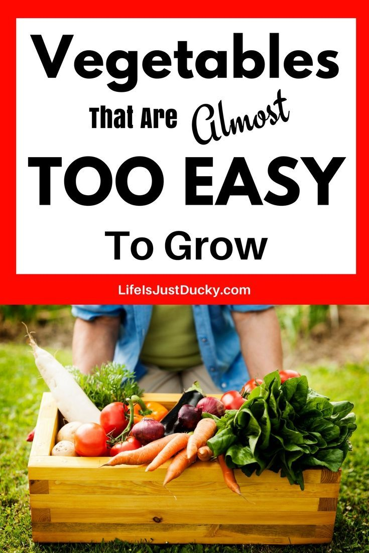 The 12 Easiest Vegetables To Grow In Your Garden And How To Grow Them. For food and fun in your back yard garden you will love these simple tips for growing veggies in your backyard. These are easy vegetables even in small spaces and containers. Great for #beginning gardeners #easy vegetables #gardening