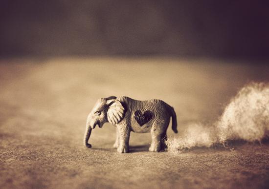 Tea cup Elephant! I want one