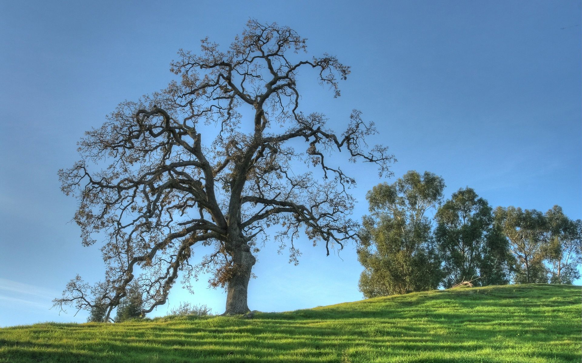   Oak Trees in Winter 1920x1200 wallpaper download page ... Pictures Trees In Winter Pinterest