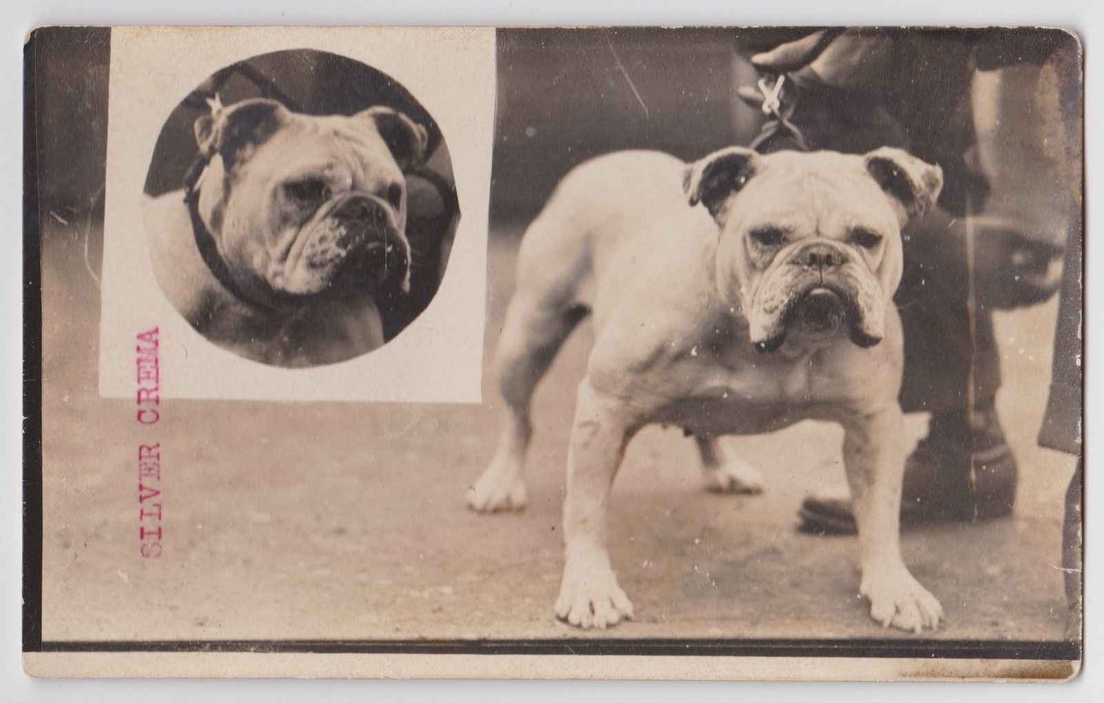 Bulldog 1900 Coleccion C H Dogs Vintage Dog