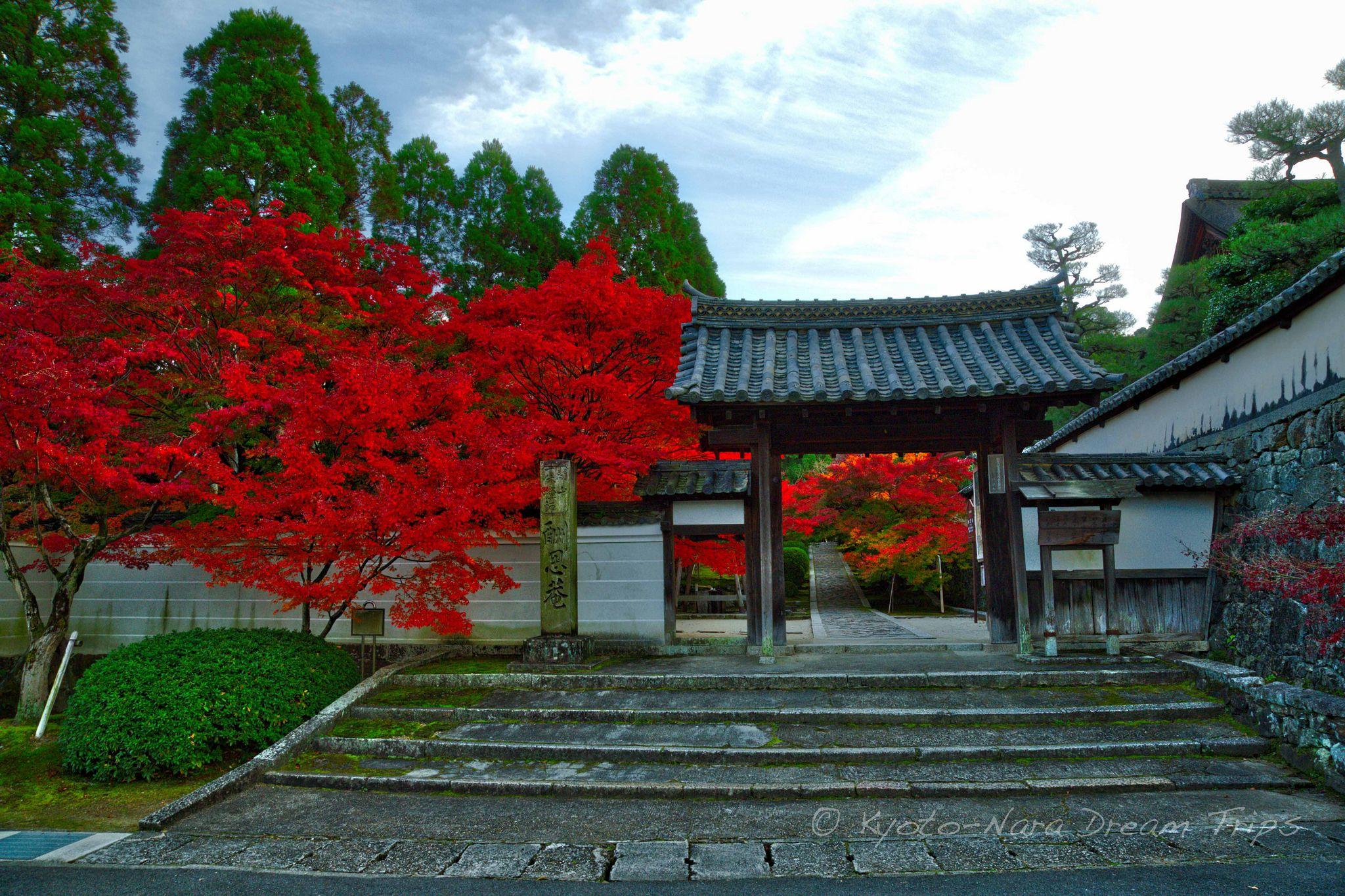 Sh On An Ikky Ji, Autumn Buzz In Kyotanabe, Japan