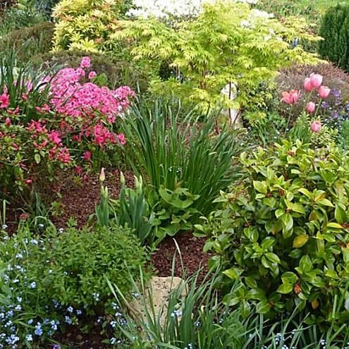 des plantes floraison longue pour un jardin fleuri toute l 39 ann e id es de jardin jardins. Black Bedroom Furniture Sets. Home Design Ideas