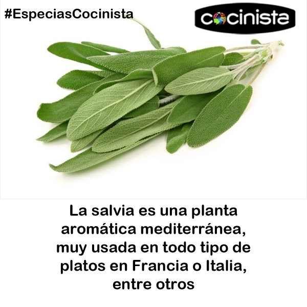 la salvia es una planta arom tica mediterr nea muy usada en todo tipo de platos en francia o. Black Bedroom Furniture Sets. Home Design Ideas