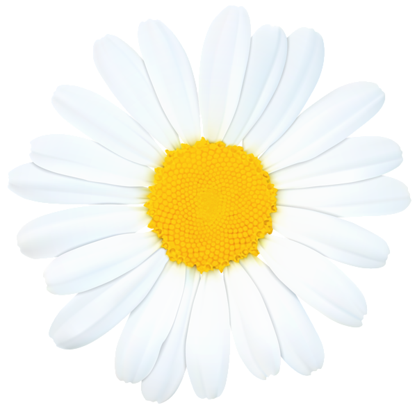 Daisy Png Clip Art Image Clip Art Art Images Free Clip Art