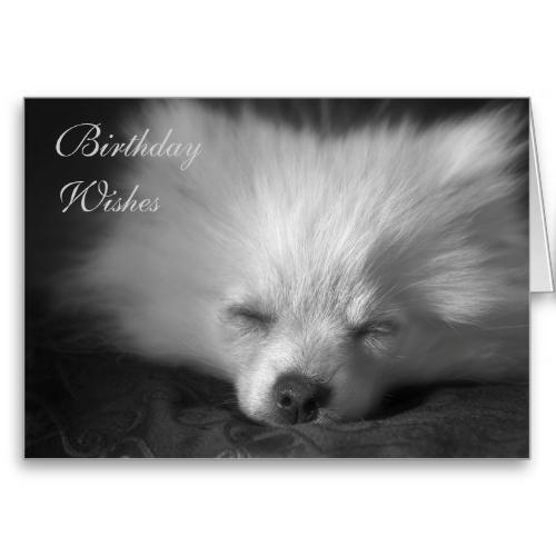 Dozing Pomeranian Birthday Card Creature Feature