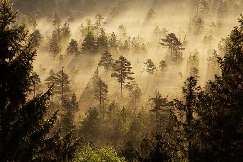 Torronsuon kansallispuisto Kanta-Hämeessä.
