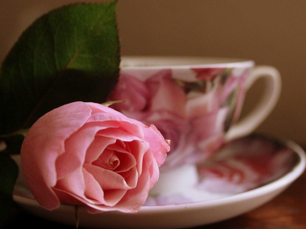 Картинки с добрым утром любимая с надписью на розах могилы памятники