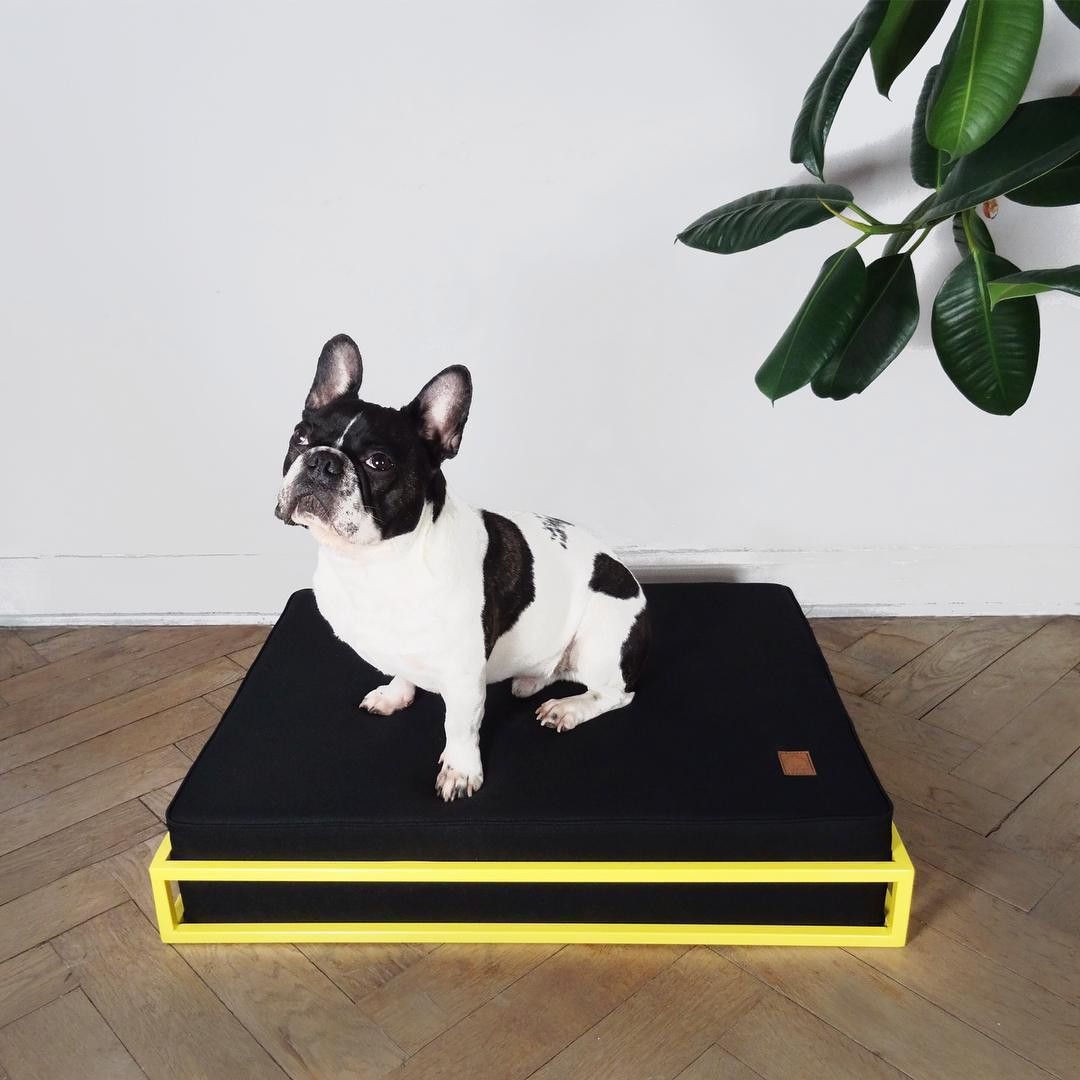 modern dog beds and feeders from hello pets  dog accessories  - modern dog beds and feeders from hello pets