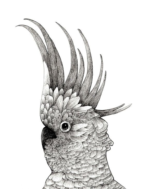 White Cockatoo Bird Ink Drawing Fine Feathers Detailed Print | Drawing | Pinterest | Bird ...