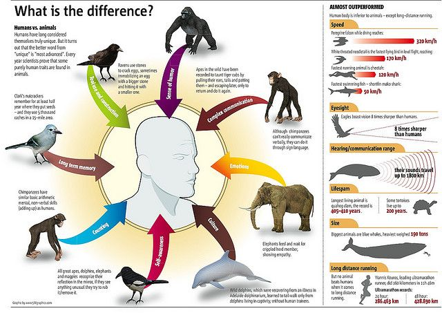 I found it interesting that this graphic states that humans are physically inferior to other animals in all things except long distance running.