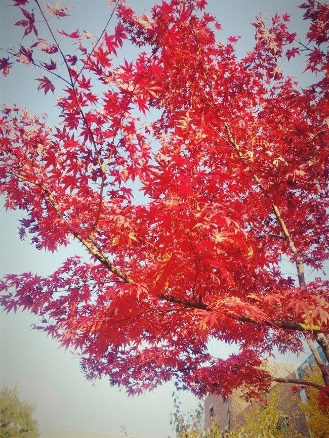 색이 진하다못해 아름답다