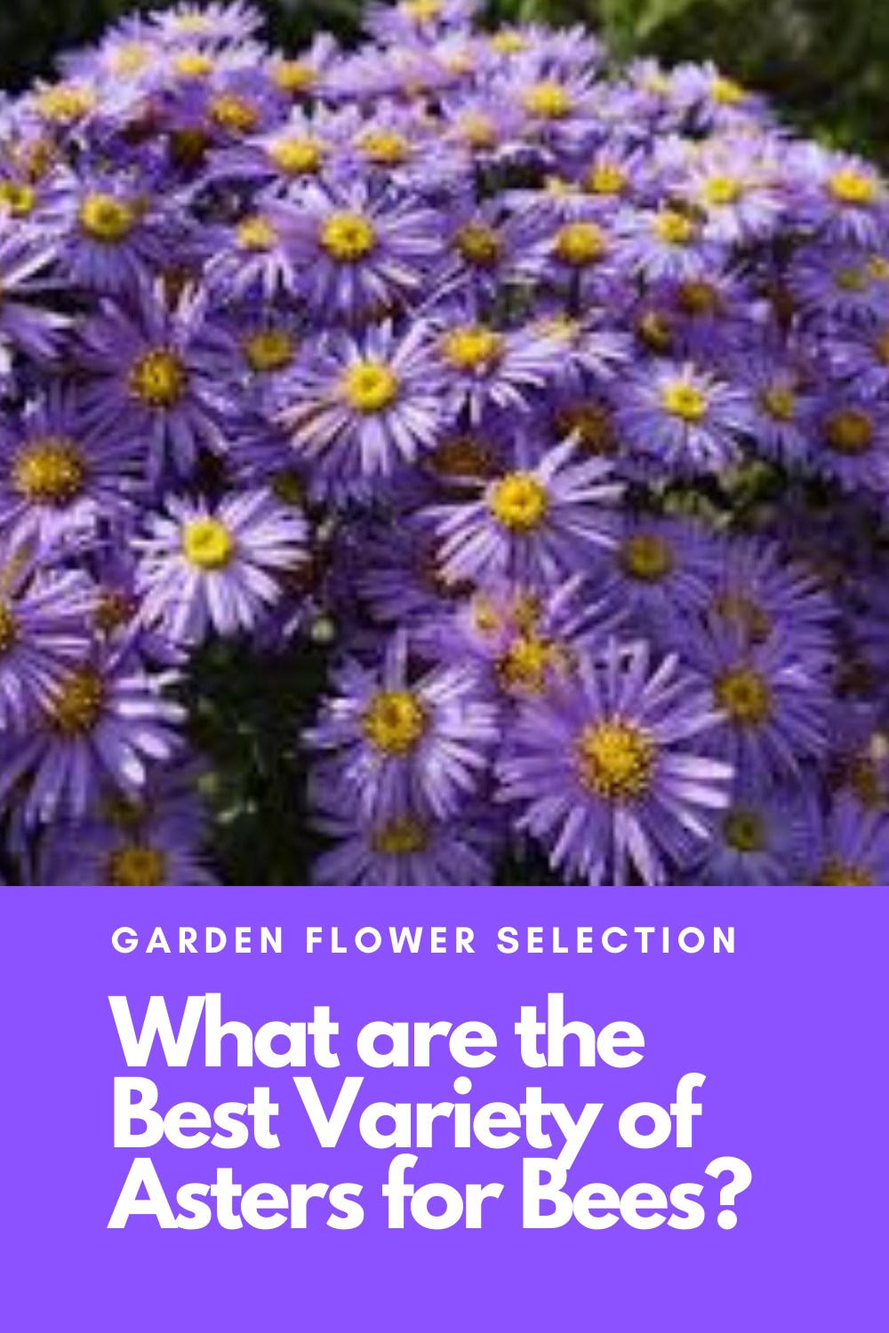 What Are The Best Flowers To Plant For Bees In 2020 Amazing Flowers Best Flowers For Bees Aster Flower