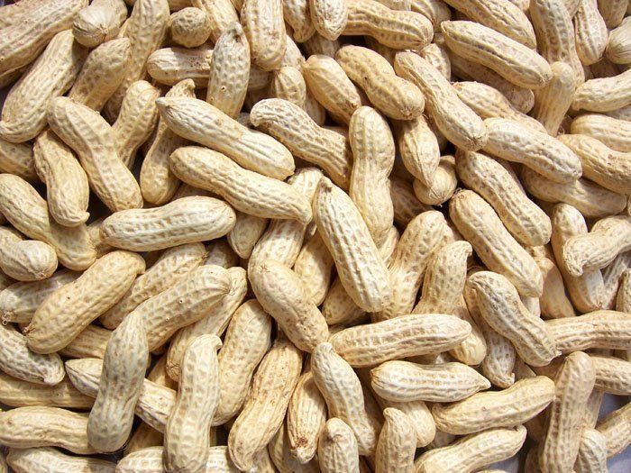 فستق الحقل الفول السوداني G Roundnut Peanut Food For Pregnant Women Diet For Children
