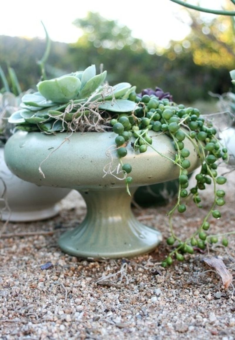 outstanding succulent gardens you can create at home
