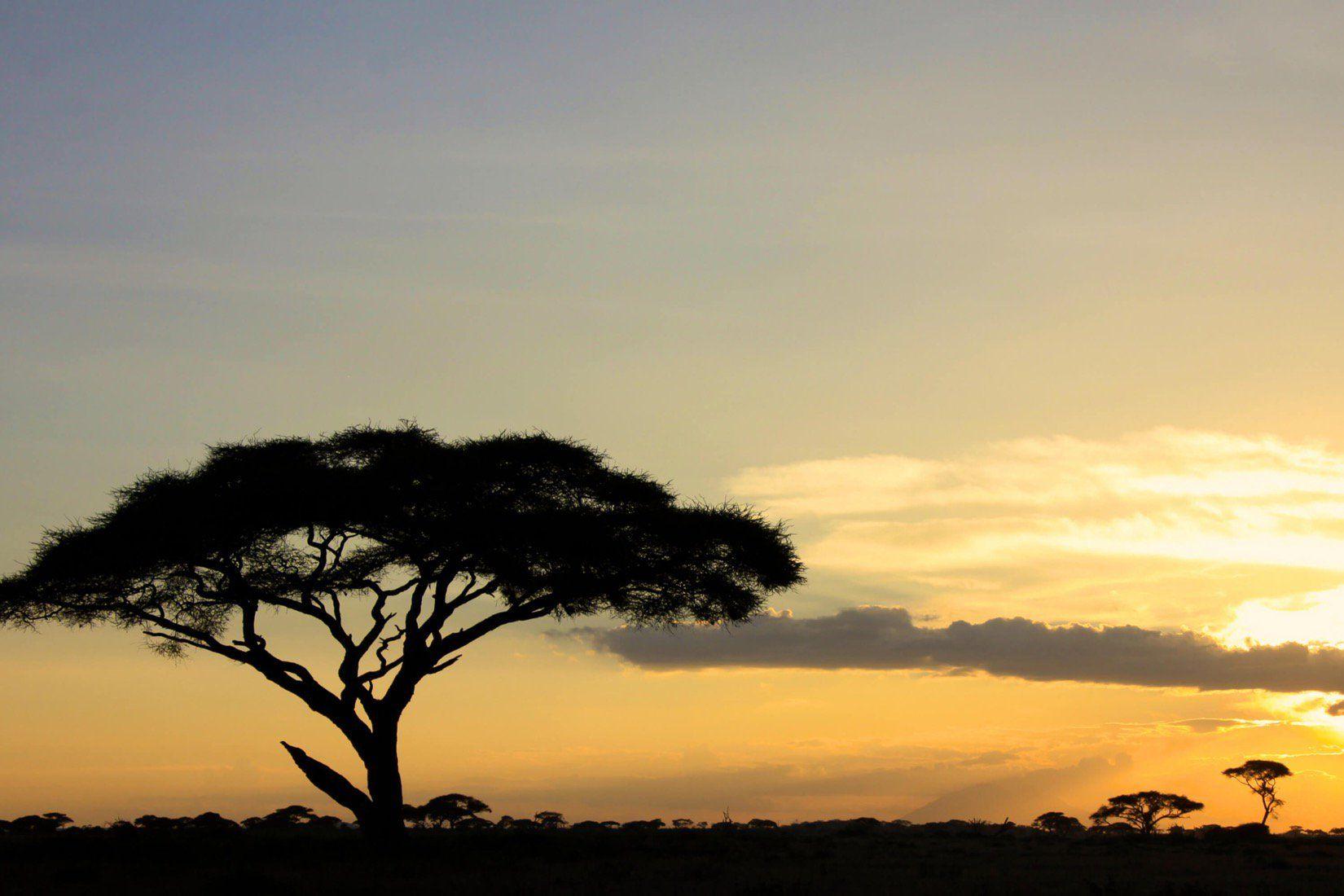 Afrikanische Savanne Sonnenuntergang Fototapete Landschaft