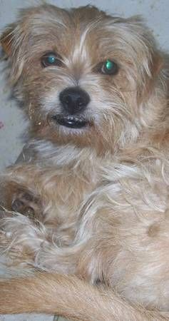 From Craigslist : Benji slipped out of his collar ...